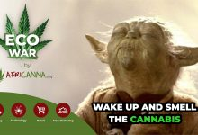 Photo of Introducing AfriCanna Innovation (Africanna Inc) SA's first Cannabis 'Incubator'